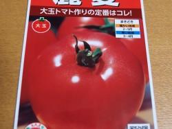 大玉トマトの大様麗夏