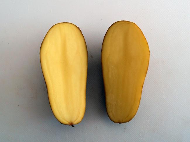 種芋を半分にカット
