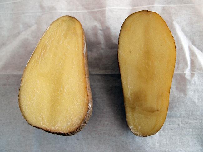 切った種芋を乾燥させる