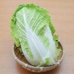 白菜の育て方