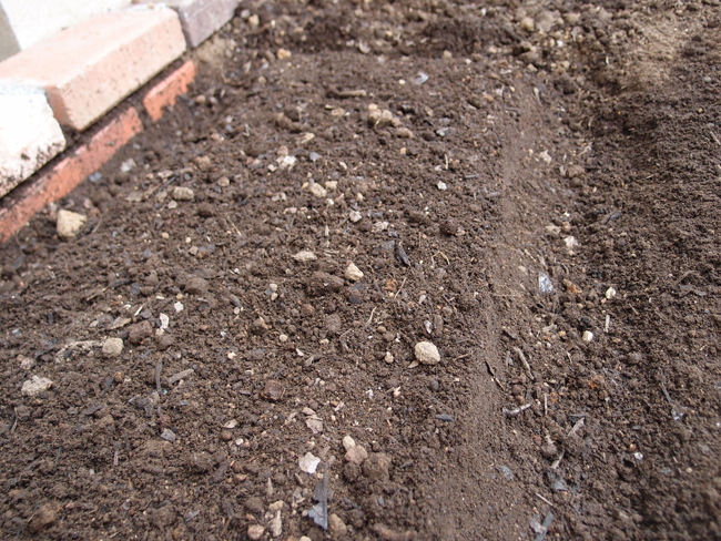 ブロッコリーの畝を作る