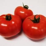 大玉トマト麗果を収穫