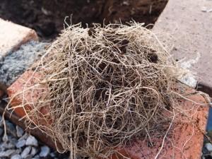 根やゴミは取り除く
