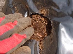 土を被せて押さえる