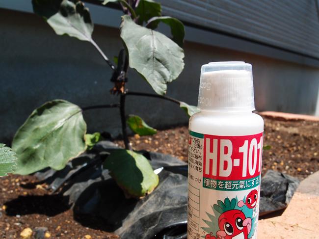 ナスにHB-101