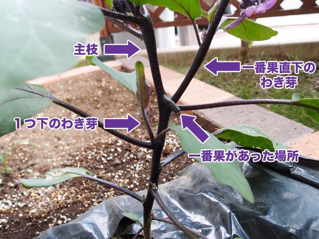ナス の 芽 かき