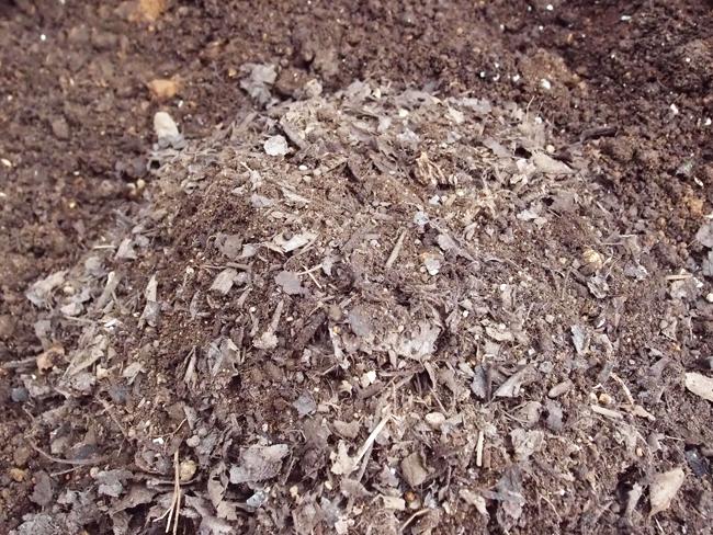 腐葉土をすきこむ