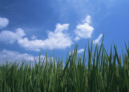 自然栽培の土作り