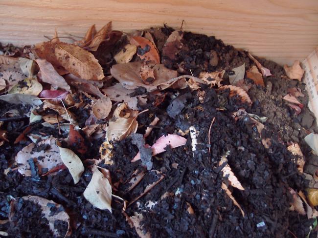 落ち葉と腐葉土