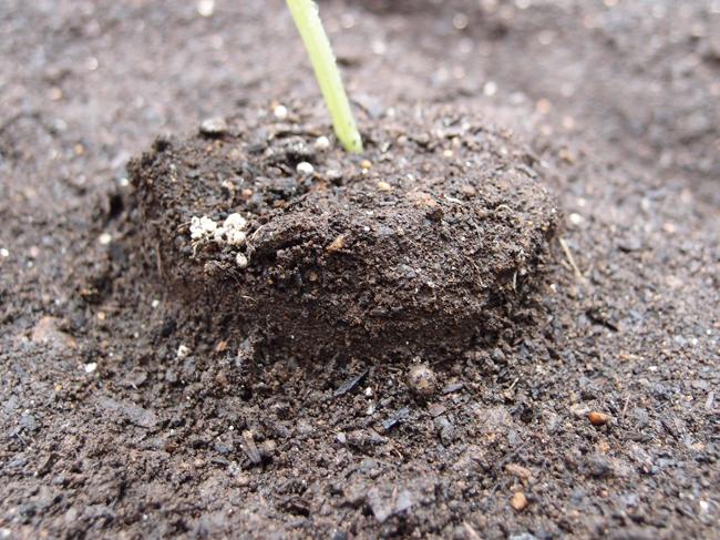 うどん粉病になりにくいきゅうりの植え方
