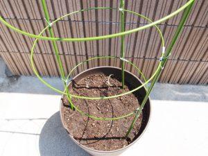 プランタートマトの植え方
