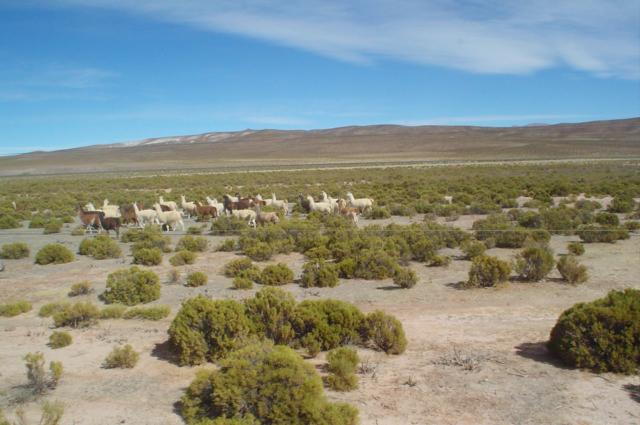 アンデス高地のイメージ