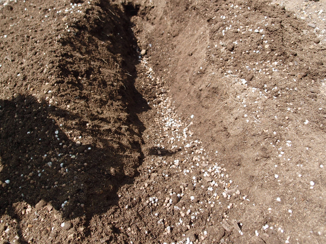 元肥を入れ深めに耕す