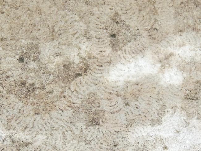 ナメクジの足跡
