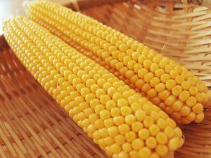 イエローポップの収穫